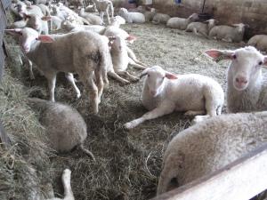 La Moutonniere